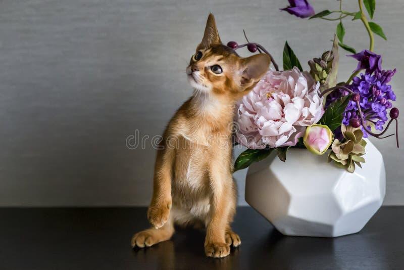 Abisyński kot z wazą kwiaty obraz stock