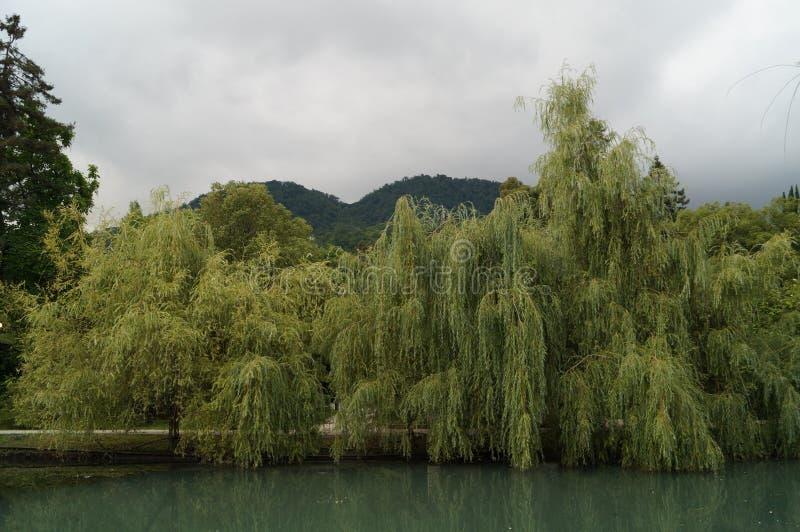Abkhazia natura obraz stock