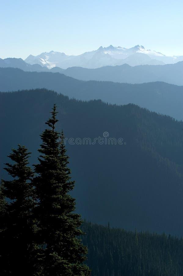 ablegruje dzikiej przyrody fotografia royalty free