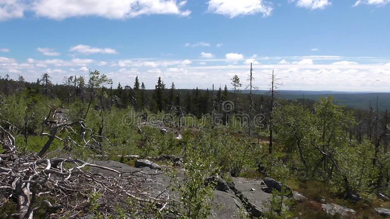 Vottovaara Karelia -. Abnormal mountain in Karelia, ugly trees, mystical landscapes. There are more than one and a half thousand stone sades. The sinister secret royalty free stock image