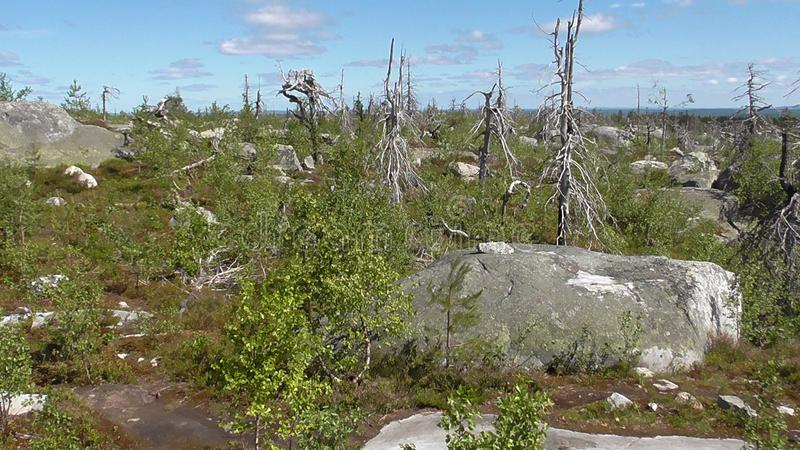 Vottovaara Karelia. Abnormal mountain in Karelia, ugly trees, mystical landscapes. There are more than one and a half thousand stone sades. The sinister secret stock image