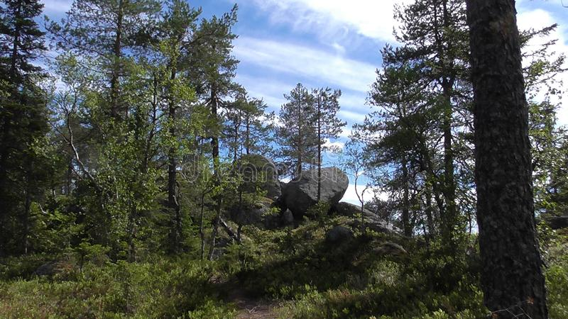 Vottovaara Karelia -. Abnormal mountain in Karelia, ugly trees, mystical landscapes. There are more than one and a half thousand stone sades. The sinister secret royalty free stock photography