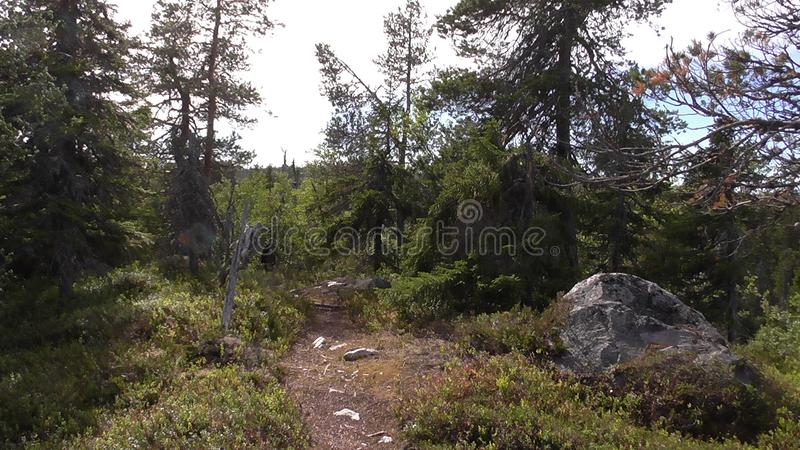 Vottovaara Karelia. Abnormal mountain in Karelia, ugly trees, mystical landscapes. There are more than one and a half thousand stone sades. The sinister secret stock photo