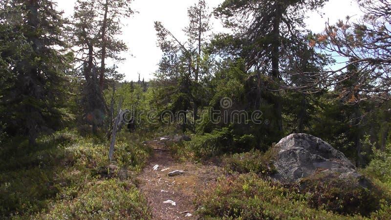 Vottovaara Karelia stock photo