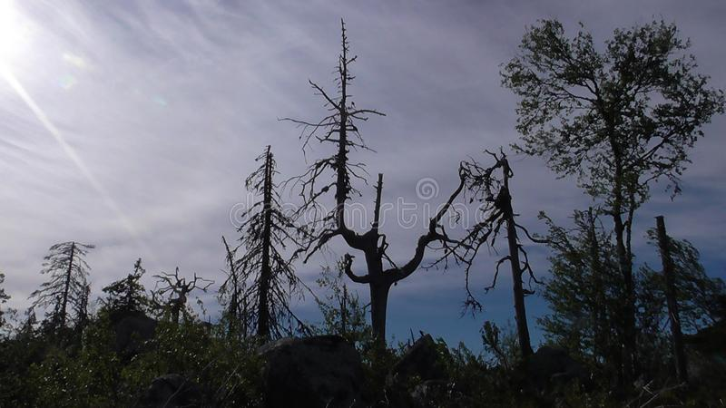 Vottovaara Karelia. Abnormal mountain in Karelia, ugly trees, mystical landscapes. There are more than one and a half thousand stone sades. The sinister secret stock photos