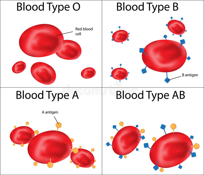 ABO Blood Group geëtiketteerd Diagram stock illustratie