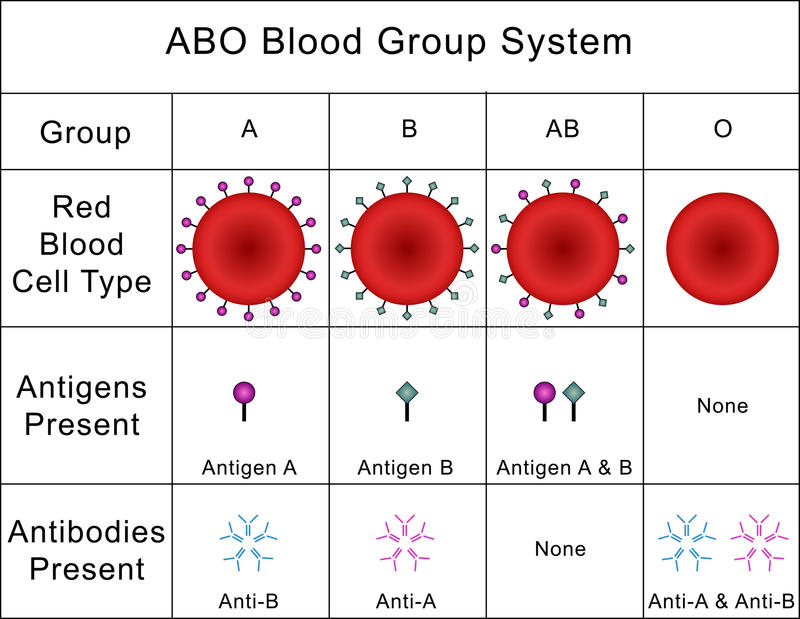 ABO Blood Group System ilustración del vector
