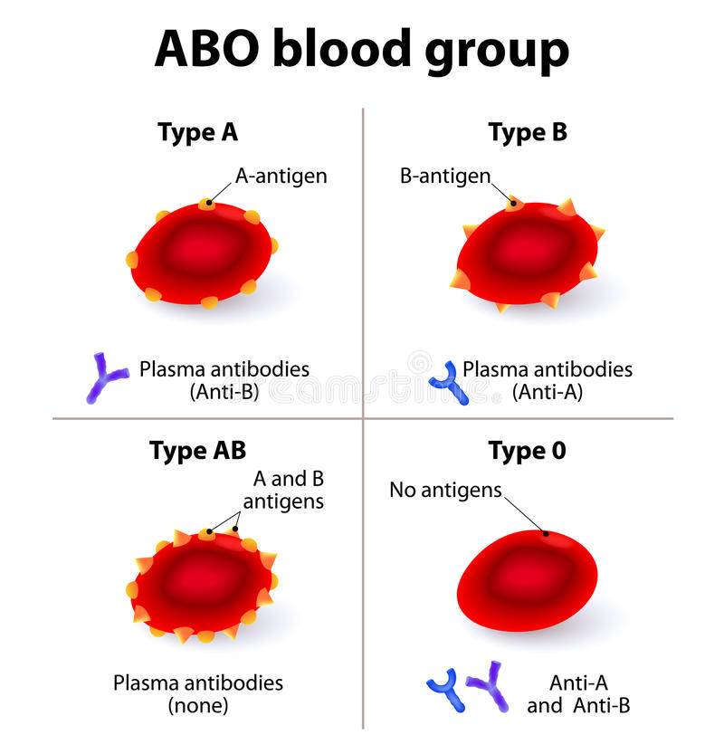 ABO Blood groups. There are four basic blood types, made up from combinations of the type A and type B antigens stock illustration