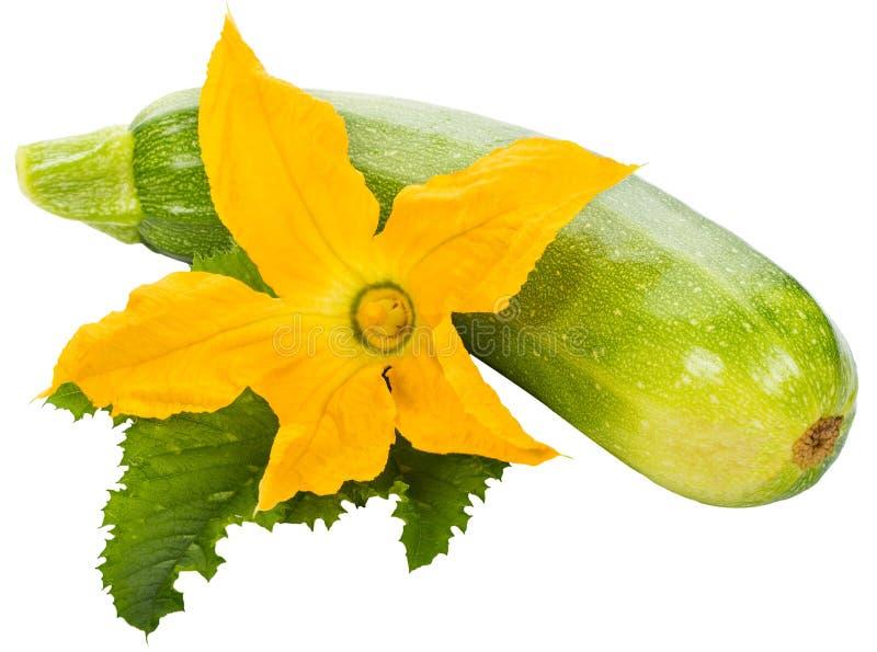 Abobrinha verde com flor e folha imagem de stock