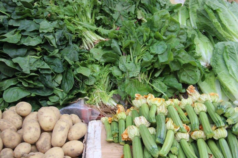 Abobrinhas verdes novos frescos e vegetal misturado imagens de stock