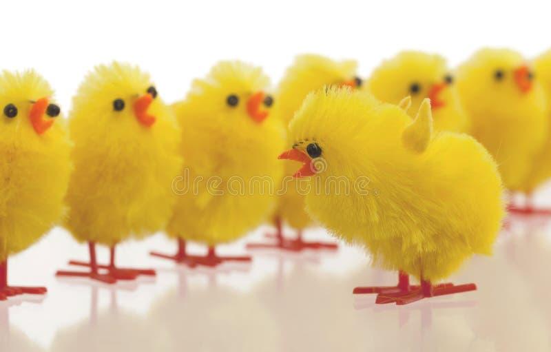 Abondance de poussins de Pâques, foyer sélectif photos libres de droits