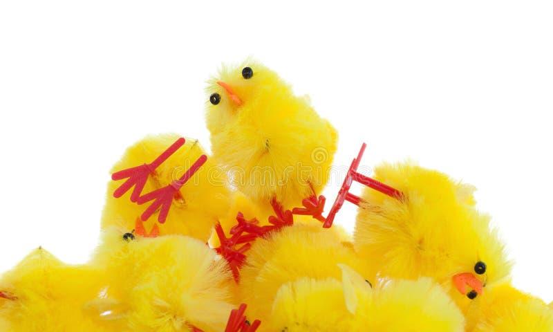 Abondance de poussins de Pâques, foyer sélectif photographie stock libre de droits