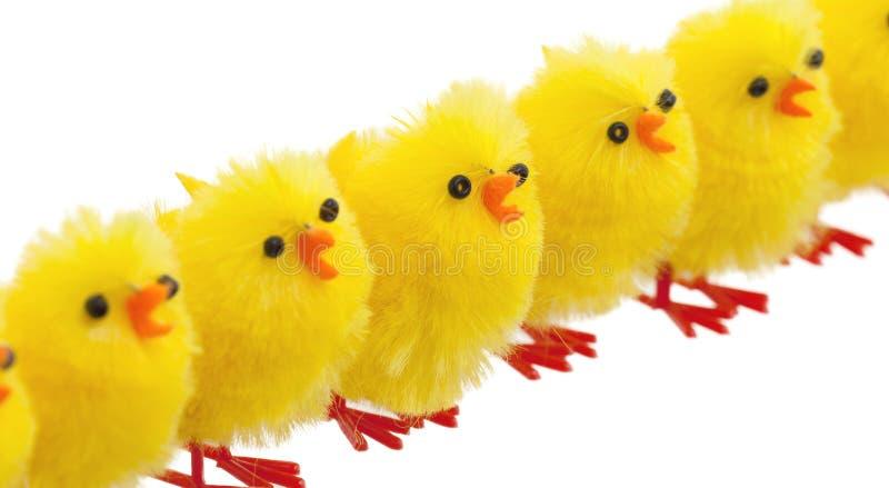 Abondance de poussins de Pâques, foyer sélectif photo stock