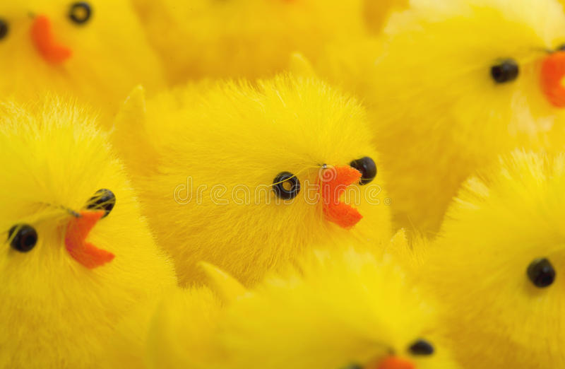 Abondance de poussins de Pâques, foyer sélectif photo libre de droits