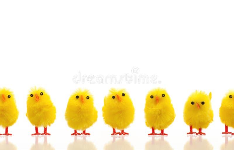 Abondance de poussins de Pâques sur une rangée photographie stock