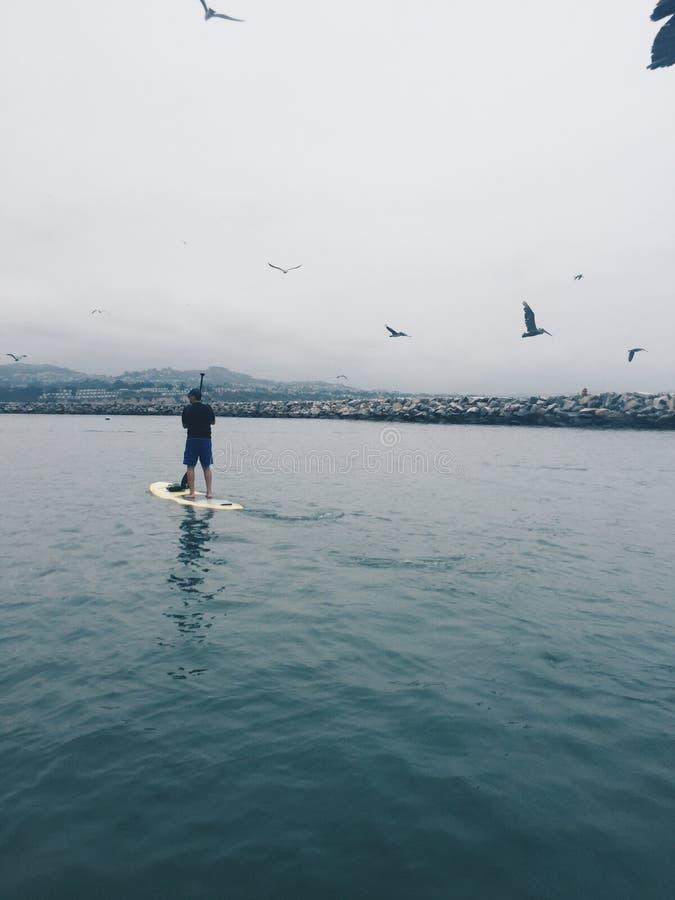 Abordaż w schronieniu otaczającym seagulls obraz stock