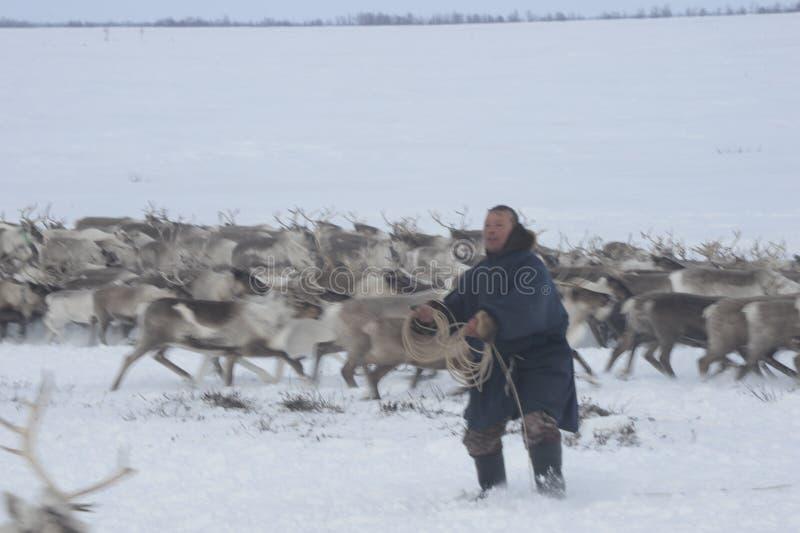 ¡Aborigen ártico ruso! fotos de archivo