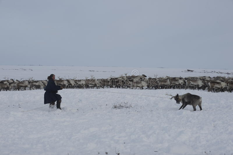 ¡Aborigen ártico ruso! imagen de archivo libre de regalías