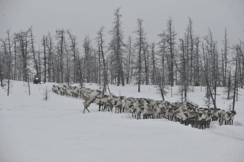 Aborigen ártico ruso imagen de archivo libre de regalías