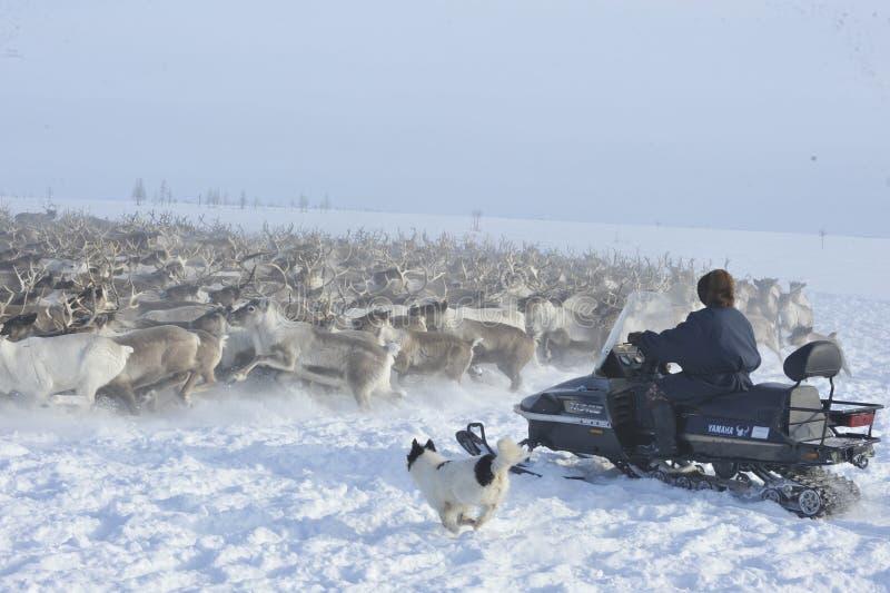 Aborigeno artico russo immagine stock
