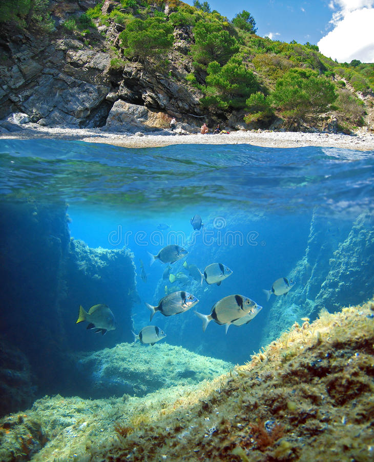 Download Above and below stock photo. Image of scuba, escape, cove - 17545804