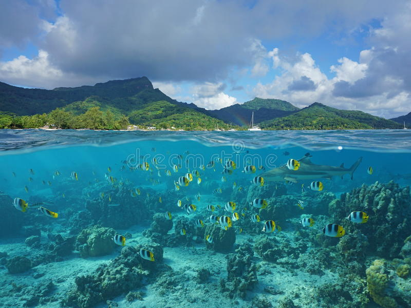 Above and below sea surface French Polynesia. Above and below sea surface, the coast of Huahine island and coral reef fish school with a shark underwater royalty free stock photography