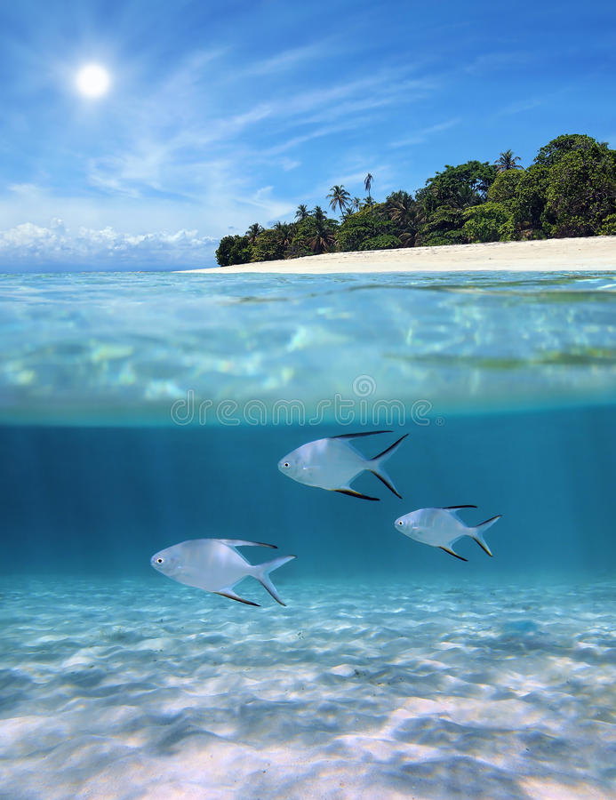 Above And Below Tropical Beach Royalty Free Stock Photography