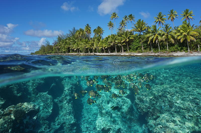 Above and below water surface French Polynesia. Above and below water surface, tropical shore with coconut trees and the reef with a shoal of fish underwater royalty free stock photos