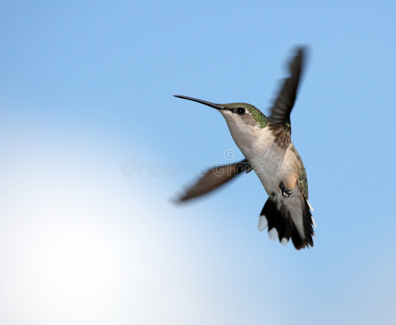 Download Above the Cloud's stock photo. Image of hummers, black - 3307406