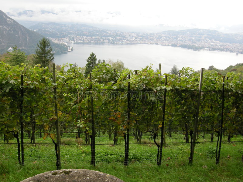 Above Lugano vineyards royalty free stock images