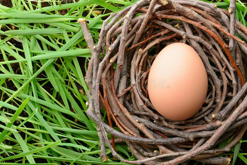 Chicken egg in nest on grass stock photo
