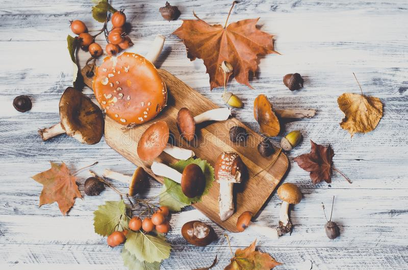 Mushrooms and leaves around board, nature autumn card stock photography