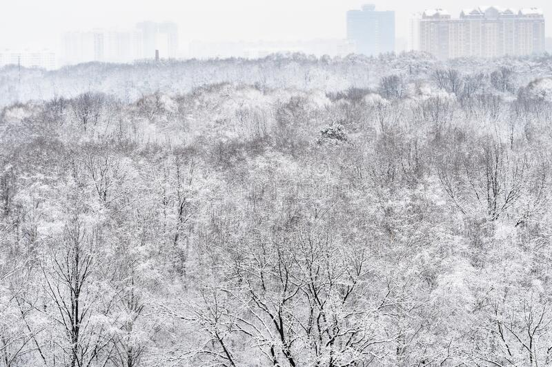 Above view of snow-covered forest and city. On horizon in overcast winter day royalty free stock photos
