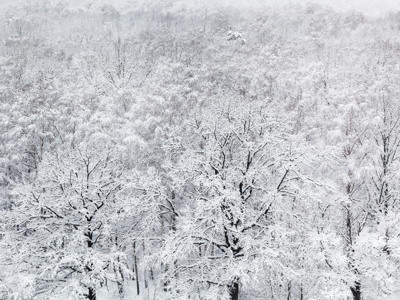 above view of snow covered oak trees in forest royalty free stock photos