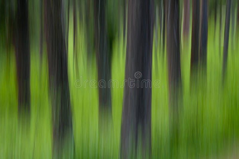 Abrégé sur arbre d'été photographie stock libre de droits