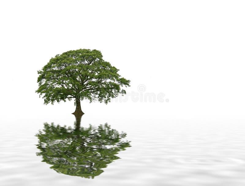 Abrégé sur arbre de chêne d'été illustration stock