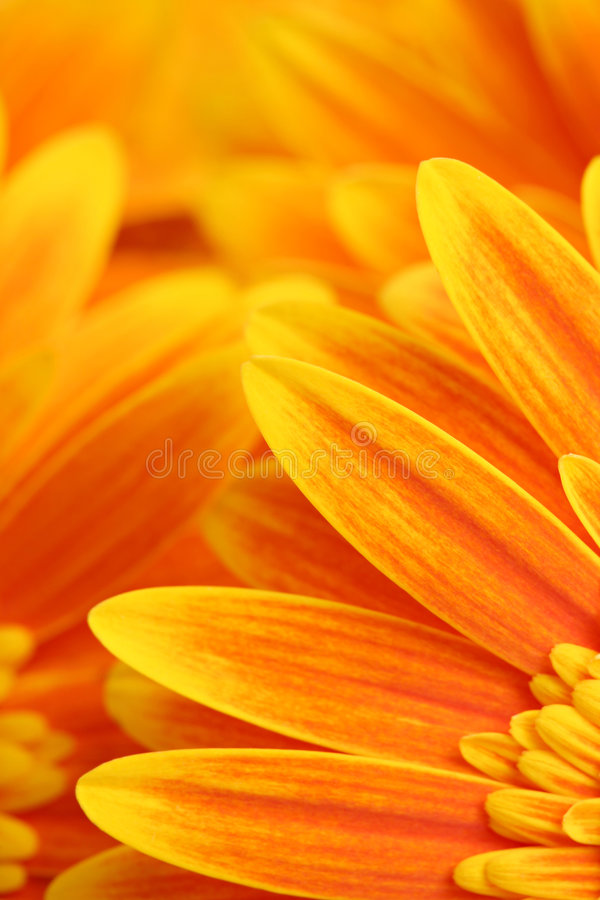 Abrégé sur fleur photographie stock
