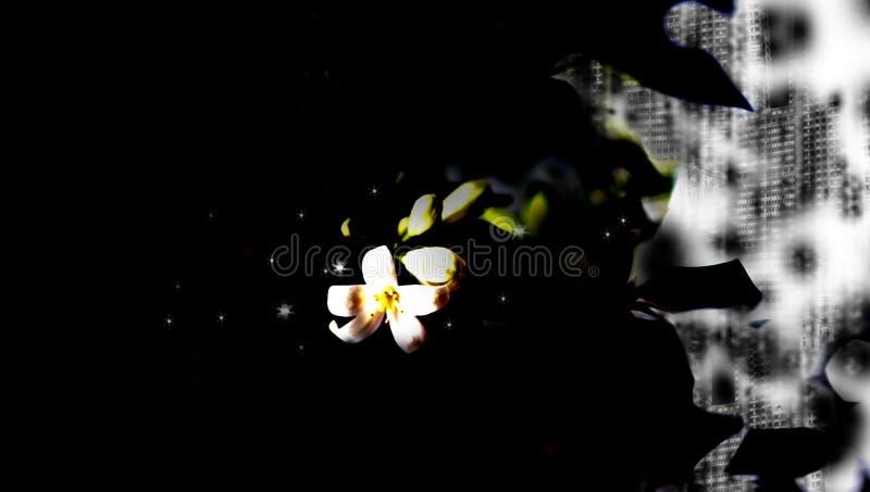 Abrégé sur fleur photos stock