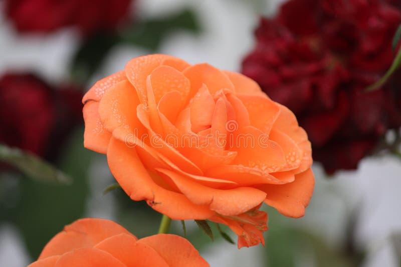 Abrégé sur fleurs photographie stock