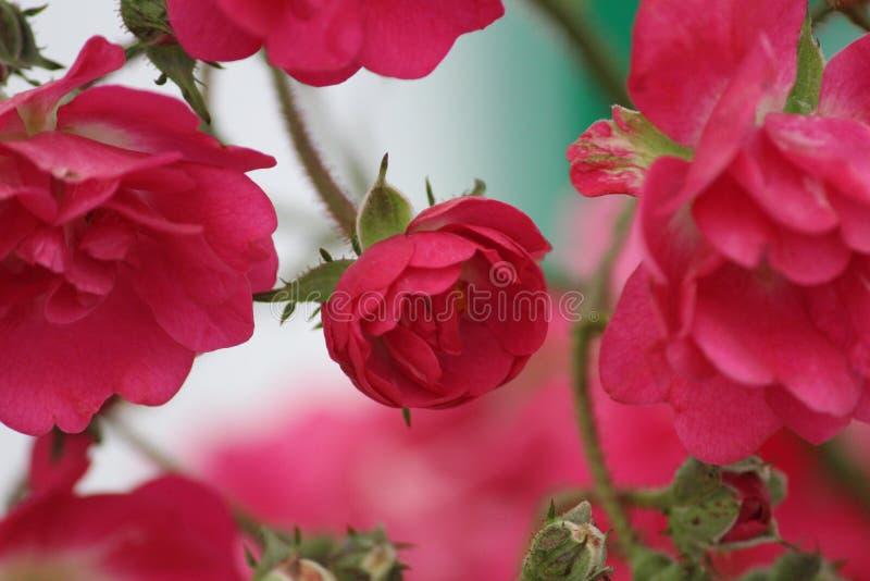 Abrégé sur fleurs photographie stock libre de droits