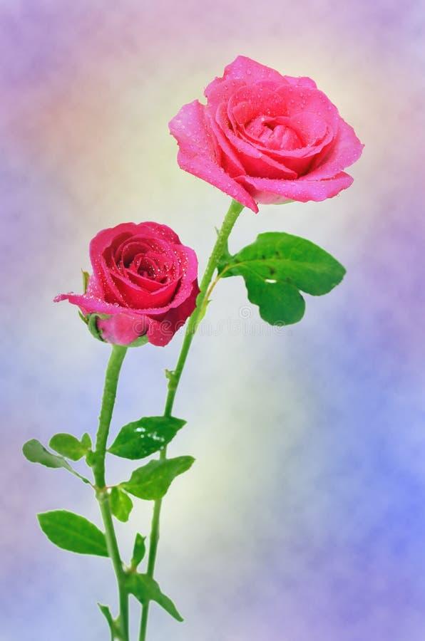 Abrégé sur fond de Rose (bon pour l'illustration, le papier peint et la conception décorative) images stock