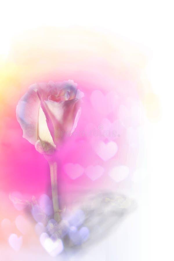 Abrégé sur fond de Rose (bon pour l'illustration, le papier peint et la conception décorative) images libres de droits