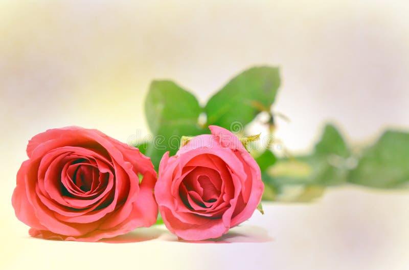 Abrégé sur fond de Rose (bon pour l'illustration, le papier peint et la conception décorative) photographie stock