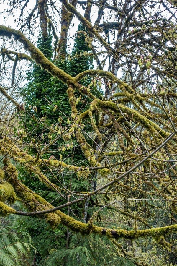 Abrégé sur moussu 6 arbre photographie stock libre de droits
