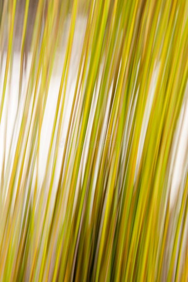 Abrégé sur nature. image stock