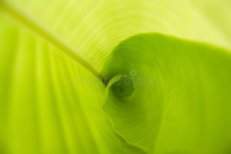 Abrégé sur photographie de feuille de banane images libres de droits