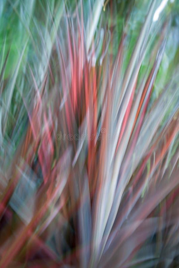 Abrégé sur tache floue de mouvement en nature photos stock