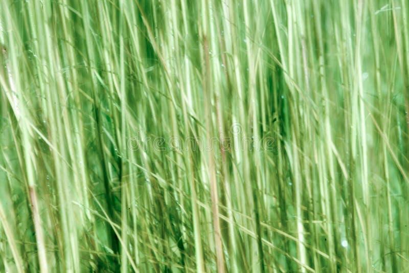 Abrégé sur tache floue de mouvement en nature photo libre de droits