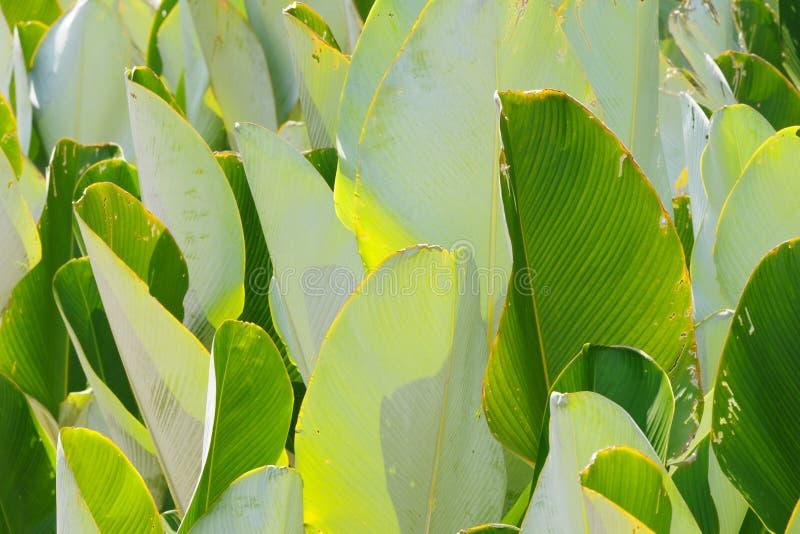 Abrégés sur lame avec différentes nuances de vert photo libre de droits