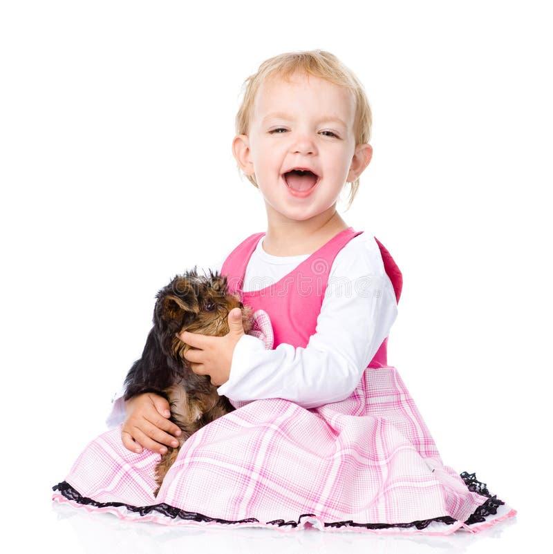 Abraço da menina um cachorrinho pequeno do yorkshire terrier Isolado imagens de stock
